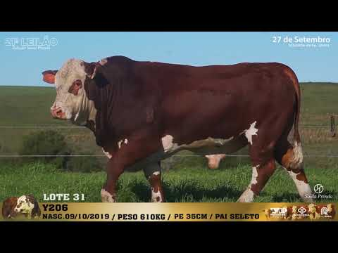 LOTE 031