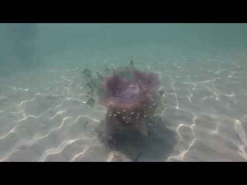 Snorkeling St. Andrews State Park 10-17-2016