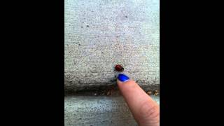 the little ladybug that could Thumbnail