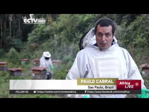 Brazil honey industry likely to be the biggest exporter in the world