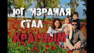 Отдых с детьми в Израиле: Пылающий Нэгев – всюду красным красно!