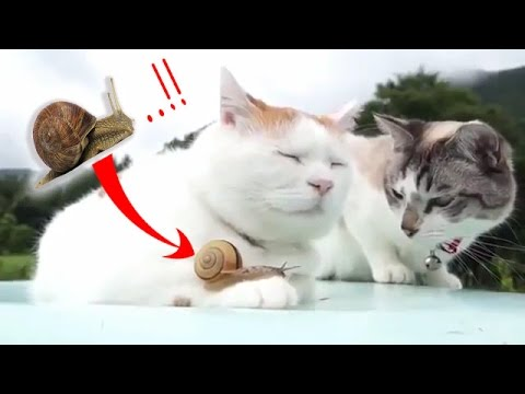 LAUGHING CHALLENGE: Try not to laugh or GRIN- The BEST ANIMAL videos # 3 -FUNNY COMPILATION