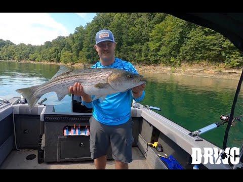 Striper Fishing Lake Cumberland Kentucky - LIMIT OUT ON HUGE FISH!!!