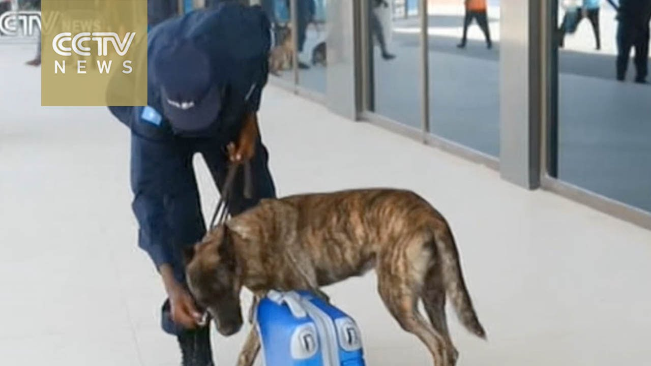 Youtube Videos Airport Security Dog