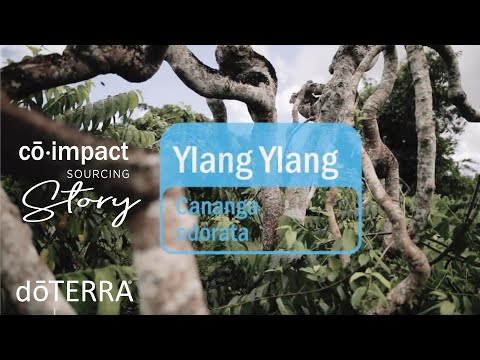 ylang-ylang-essential-oil---doterra-sourcing-story