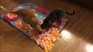 6 Fun Cat Puzzle Toys