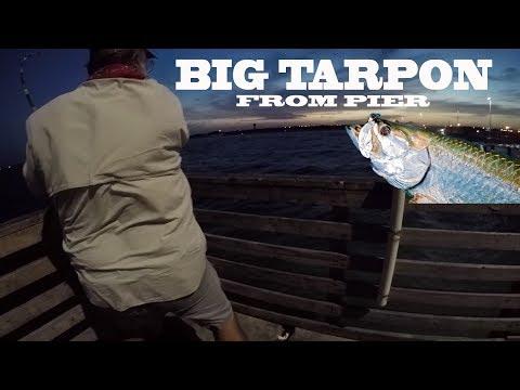 Tarpon at Bob Hall Pier at Night