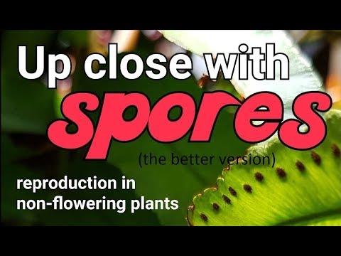 How do unisexual plants reproduce through spores