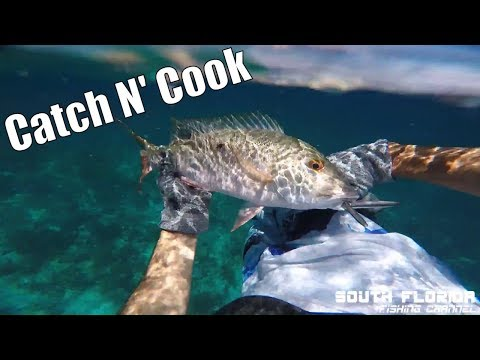 Catch N Cook Spearfishing + Dolphins & Manatees