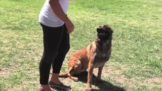 Dog Training Arizona Pet Obedience. All Ages All Breeds