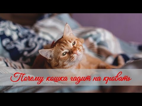 Почему кошка гадит на кровать  Why does a cat shit on the bed