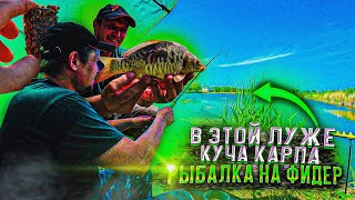 Фидерная рыбалка весной 2021 карпы клюют один за одним переселил в дикарь HD