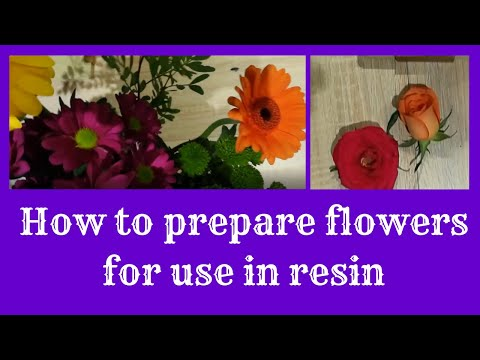 flower-preparation---how-i-press-and-dry-fresh-flowers-ready-to-be-encapsulated-in-resin.