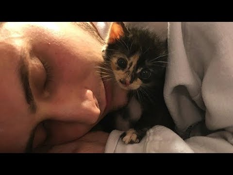 Rescue Tiny Kitten Lost All Her Family Growing Up Alone But So Sweet and Adorable