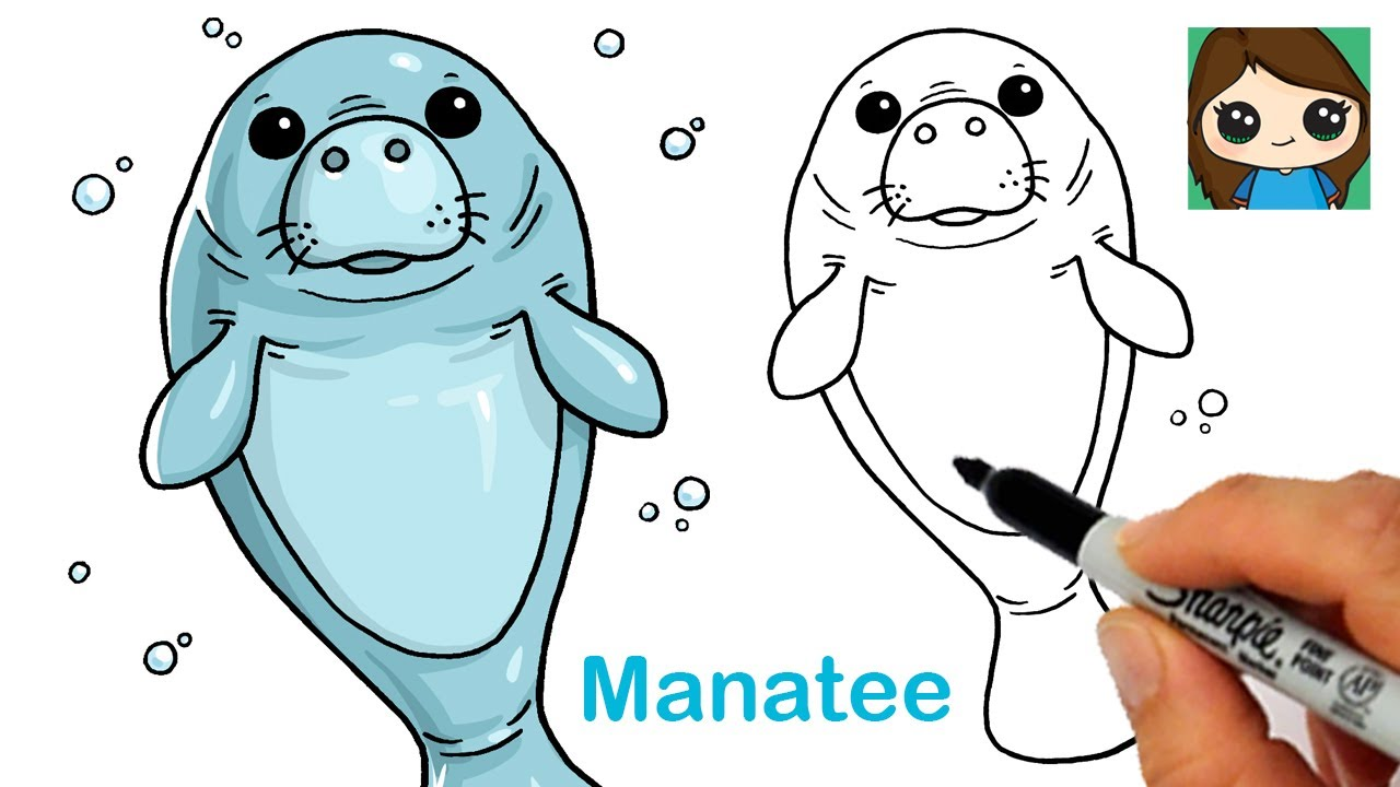 How to Draw a Manatee Easy