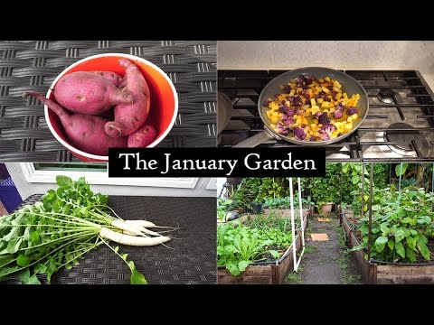 The California Garden in January - Winter Harvests & Delicious Recipes!