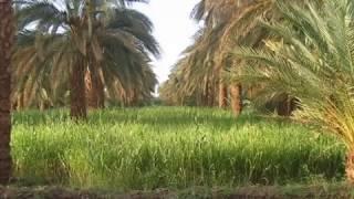 محمد النصري :: معزور لو قلبي اشتهاك :: اغاني طنبور 2018