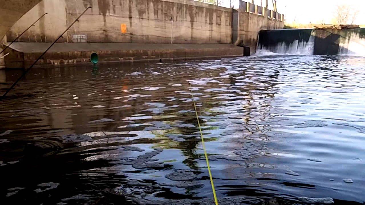 Carp Fishing In Northfield Minnesota Youtube