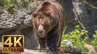 4K Ultra HD Video of Wild Animals - 1 HR 4K Wildlife Scenery with Floating Music thumbnail
