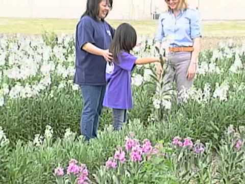 Farming in Torrance, a Farming Legacy - Torrance Centennial