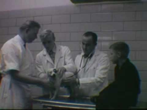1955 Colorado A&M School of Vet Medicine commercial