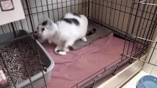 Zwierzęta Też Chcą Mieć ŚWięta 2018- calopet i convalescence