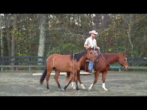 How to Teach your Horse Liberty and Connection