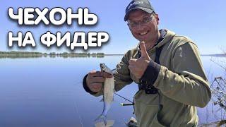 Рыбалка на фидер Дядя Фёдор ловит днепровскую чехонь