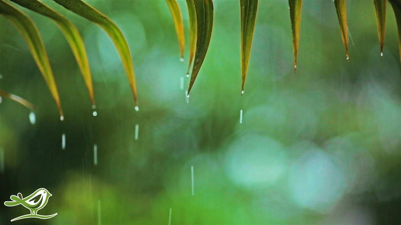 Download Relaxing Piano Music & Rain Sounds 24/7