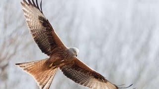 #1984. Птицы - хищники (В мире животных)