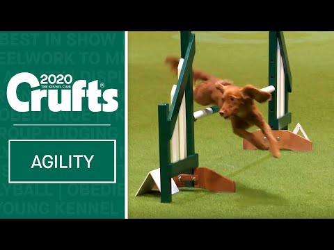 Agility  Championship Final | Crufts 2020