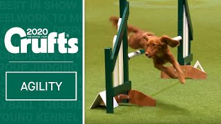 Agility  Championship Final | Crufts 2020