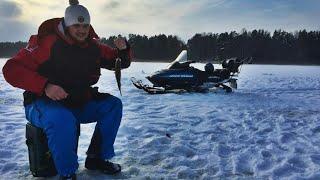 Чудское озеро зимняя рыбалка Отборная плотва д. Спицино  Peipsi