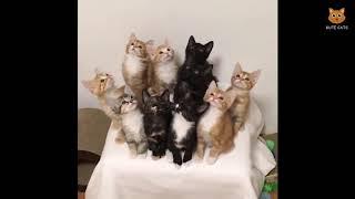 「かわいい猫」 笑わないようにしようとしてください - 最も面白い猫の映画 #165