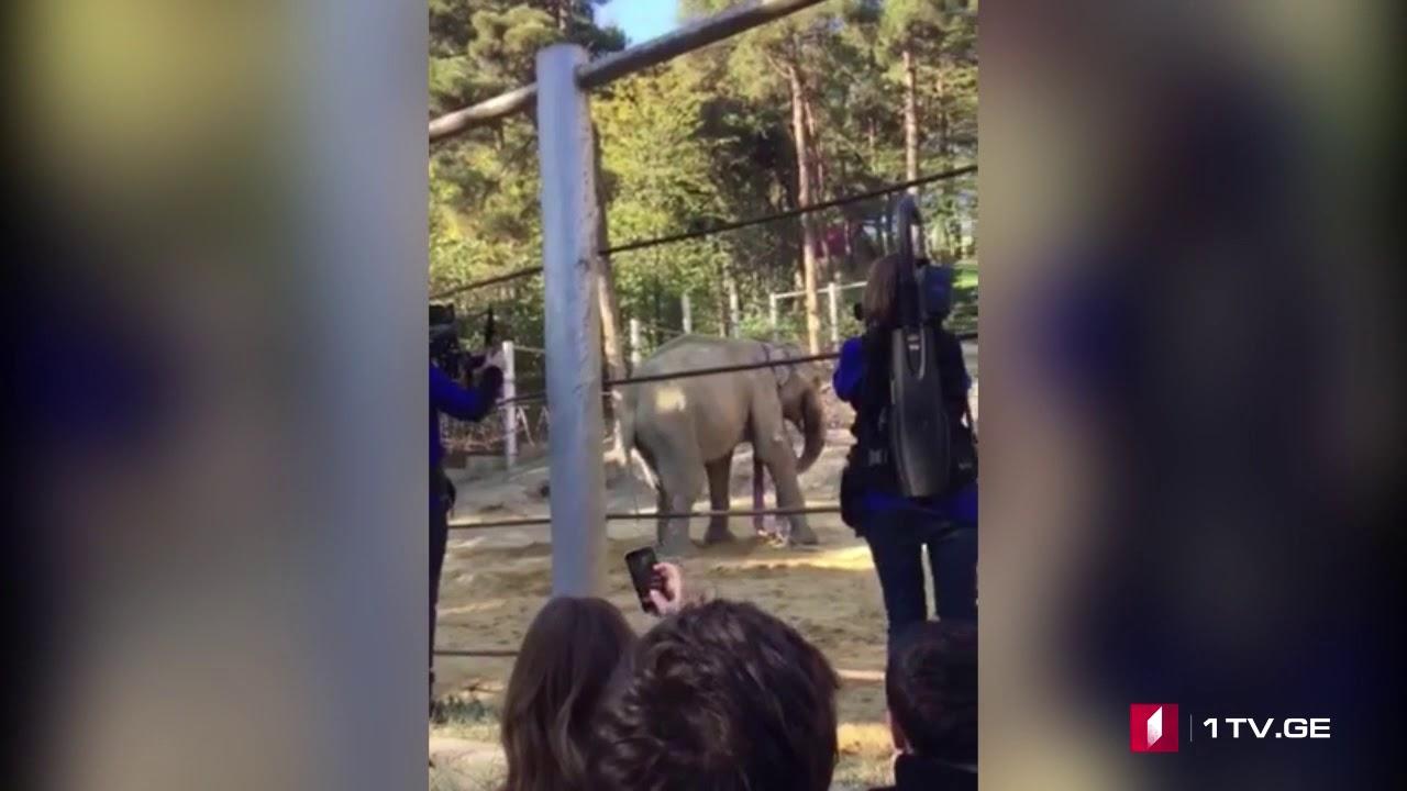 ოპერაცია წარმატებით დასრულდა სპილო გრანდი ნარკოზიდან გამოვიდა