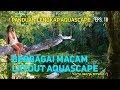 Belajar Layout Aquascape - Episode 10