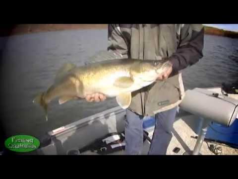 Fall Walleye on Tobin on Fishing Saskatchewan.