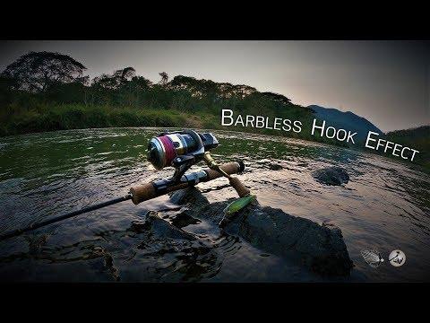 Barbless Hook Effect