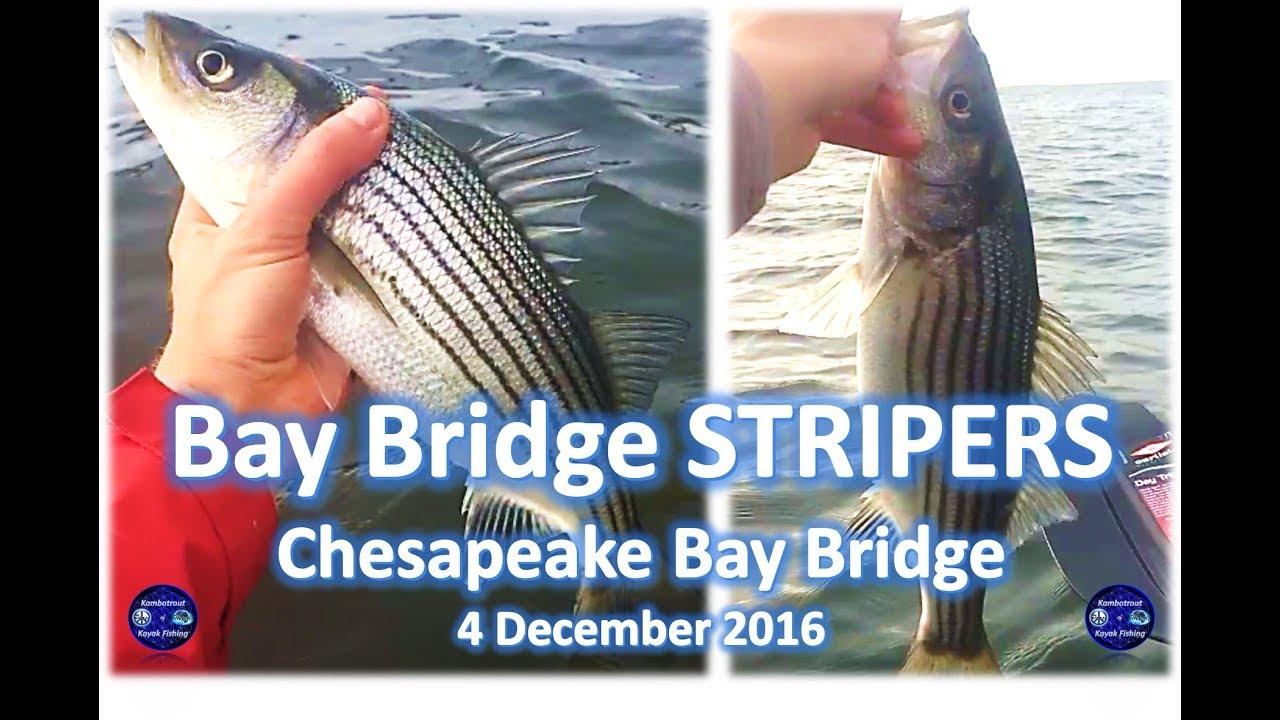 Striper Fishing Sandy Point State Park, Chesapeake Bay Bridge, 4 December  2016