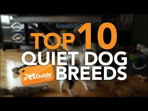 Top 10 Quiet Dog Breeds