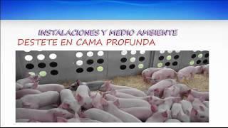 El cerdo pos destete