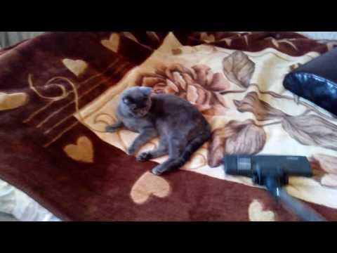 Кот боится пылесоса