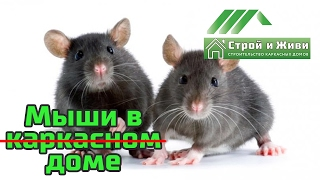 Мыши, крысы, грызуны в каркасном доме. Так ли это???