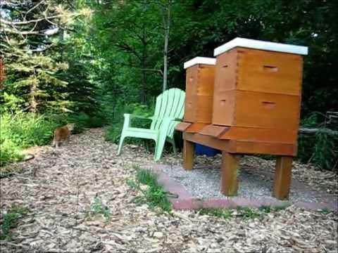 Backyard Beekeeping Part 17(S2:E3): Pekoe