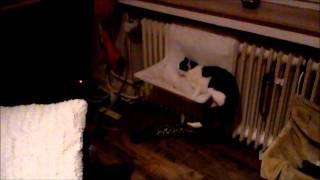 Narkotisierte Katze - funny narcotised cat