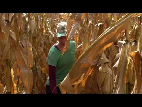 Our Little Rebellion™ Cuts the Crop with Non-GMO Corn Field Art