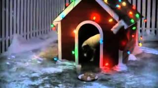 Download Dog wishes for christmas MP3 song and Music Video