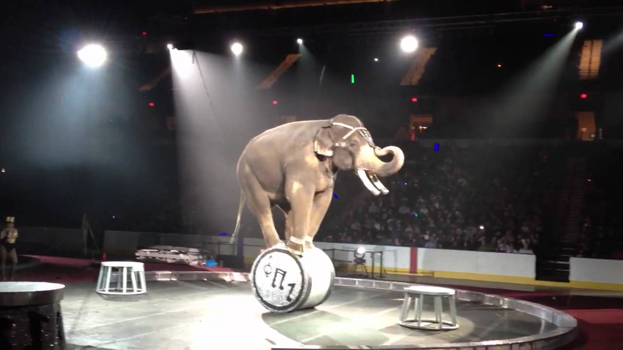 Circus Elephants Doing...