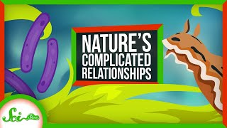 Symbioses Are Way More Complex Than You Think!