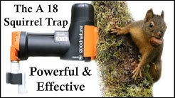 The A18 Squirrel Destroyer - A Powerful & Effective CO2 Squirrel Trap - Mousetrap Monday